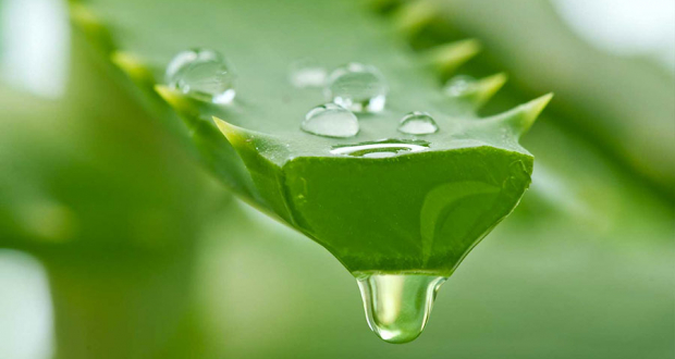 aloe vera for hair growth revucell